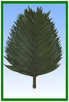 Premium Emerald Image