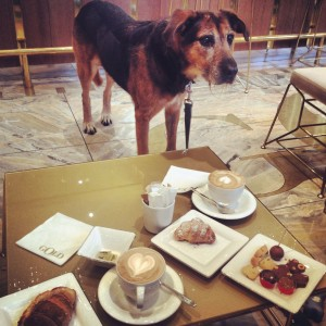 Giulietta! How I love this dog!