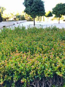Alhambra tour Musement Generalife gardens myrtle