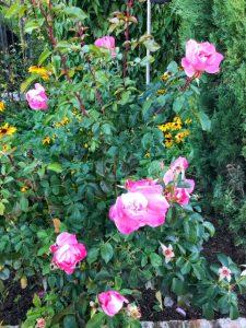 Alhambra tour Musement Generalife gardens roses