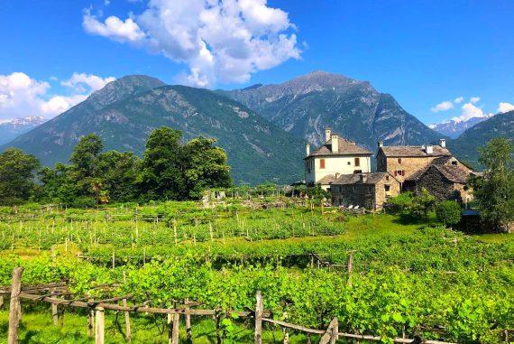 Alto Piemonte Nebbiolo wine