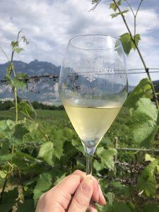 Trentodoc Italian Sparkling Wine Travel Guide vineyards