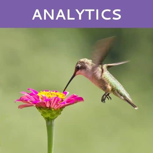 Analytics by Hummingbird Marketing in Seattle and Cleveland