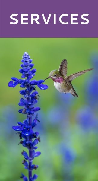 Services - Hummingbird Marketing Services — Web Design, Social Media, Publicity, Content Writing, Advertising, SEO, Analytics, Consulting, Branding, and Other Marketing Services