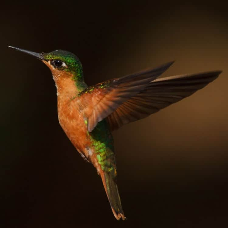 Hummingbird Marketing Services — Web Design, Social Media, Publicity, Content Writing, Advertising, SEO, Analytics, Consulting, Branding, and Other Marketing Services