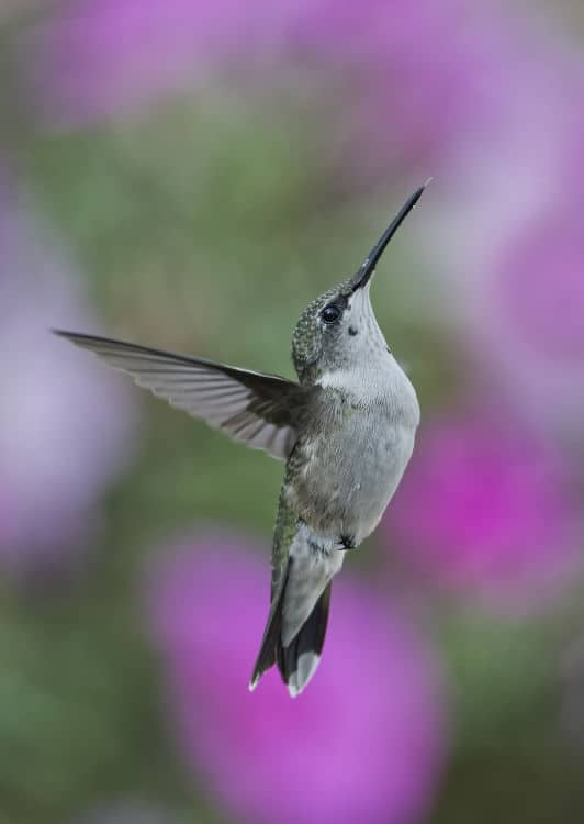 Why Choose Hummingbird Marketing Services for Social Media Marketing