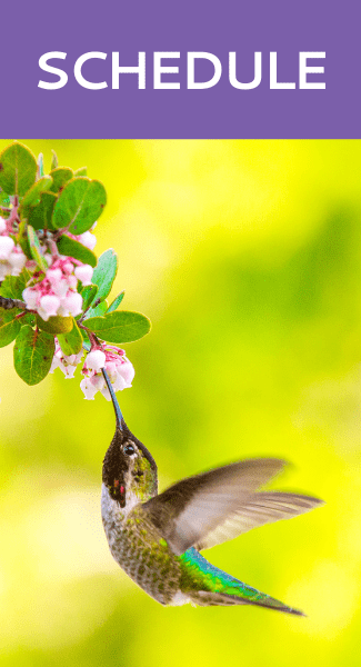 Schedule with Hummingbird Marketing Services