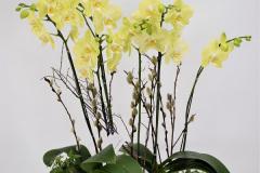 Yellow orchid Arrangement, $175