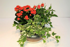 Red Planter, Starting @ $45