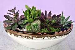 Succulent Planter,   Starting @ $75