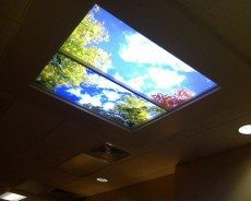 Spring Day Light Fixture