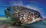 220px-Only_today_I_got_to_know_this_Fish_better!_What_about_you?_(3852325083)