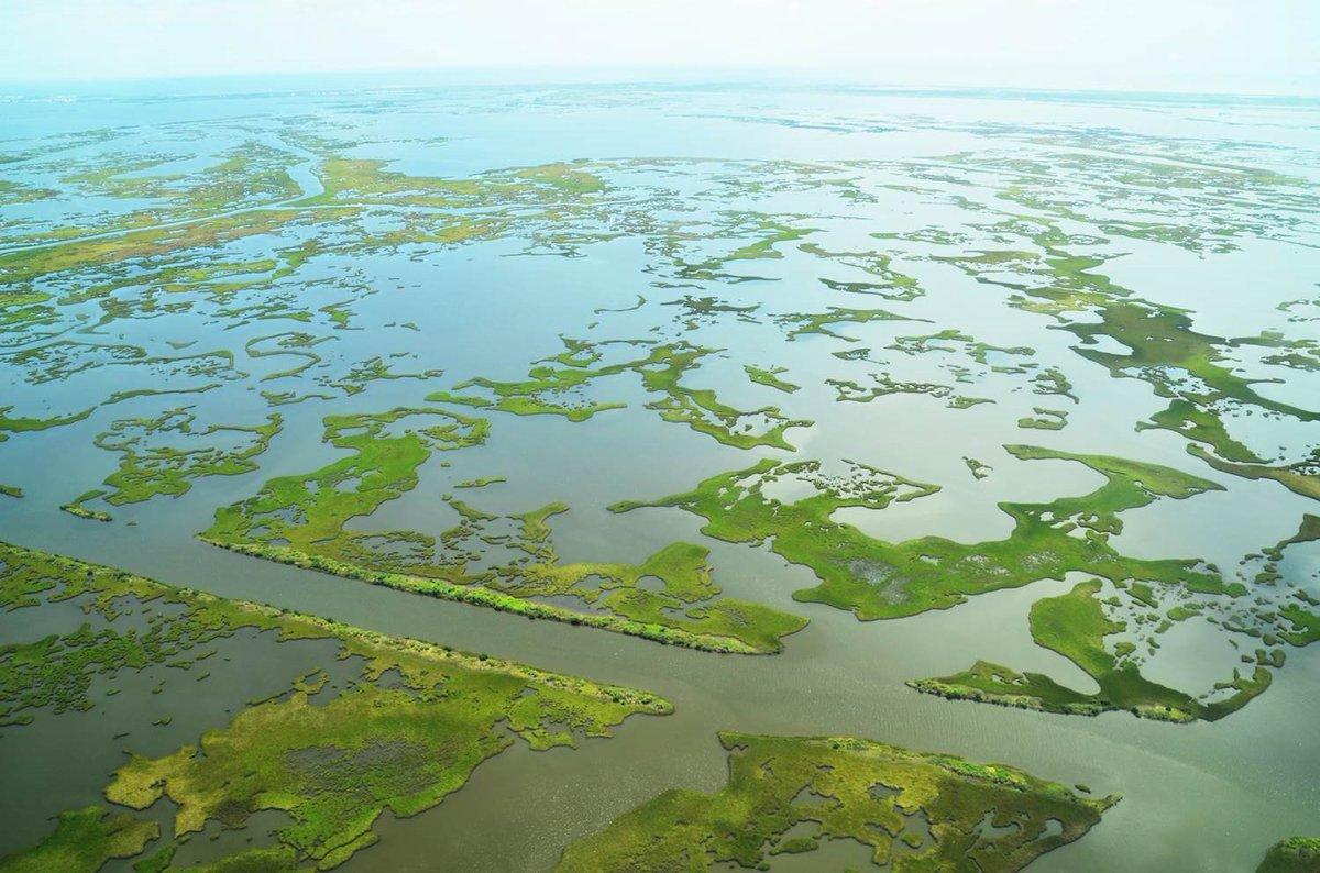 A Celebration of Wetlands