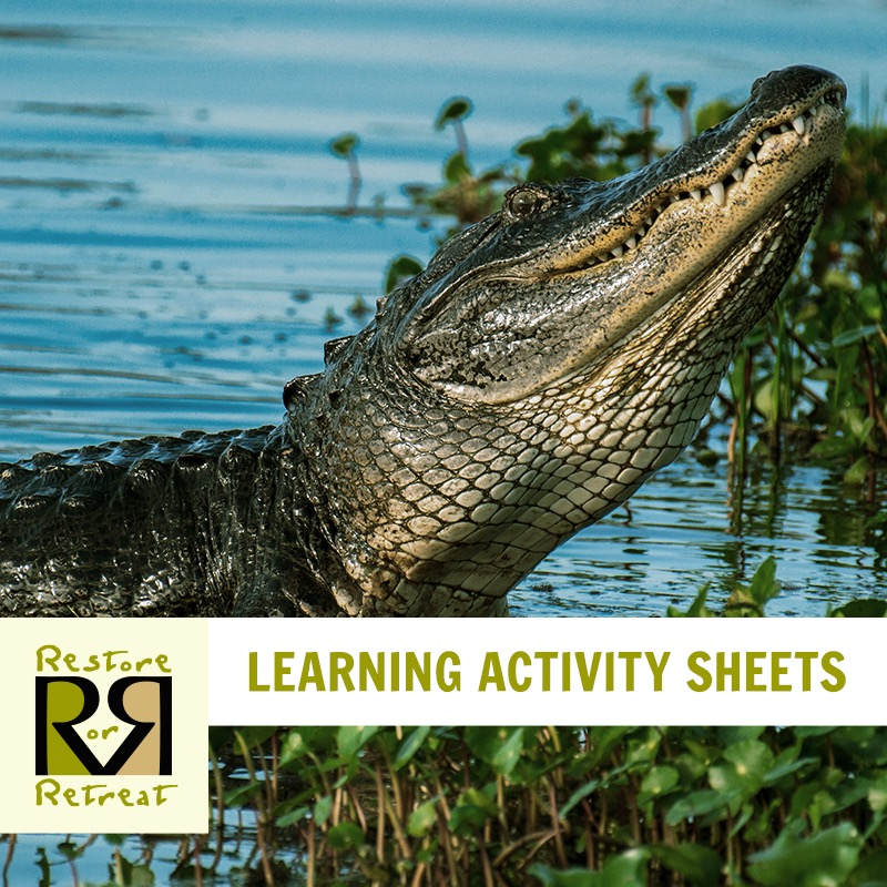 ROR Launches Activity Booklet!