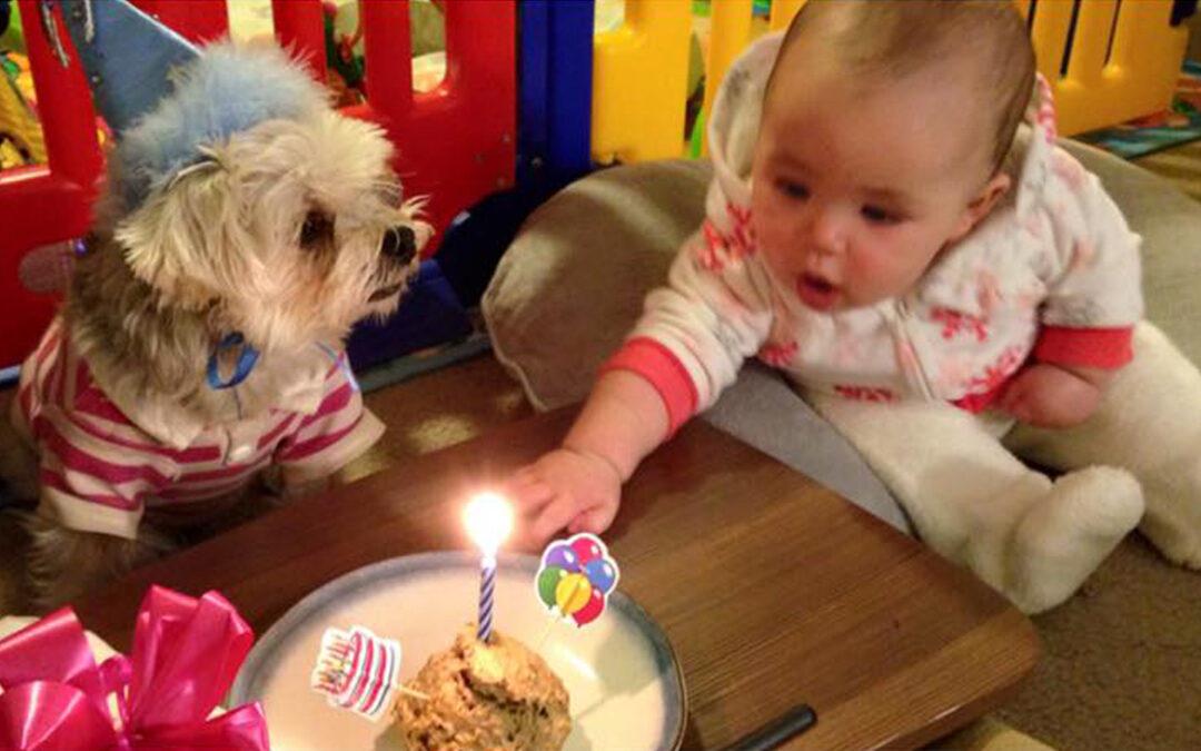 Donut's Dog Birthday Cake RECIPE