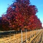 slideshow-photo-ash-autumn