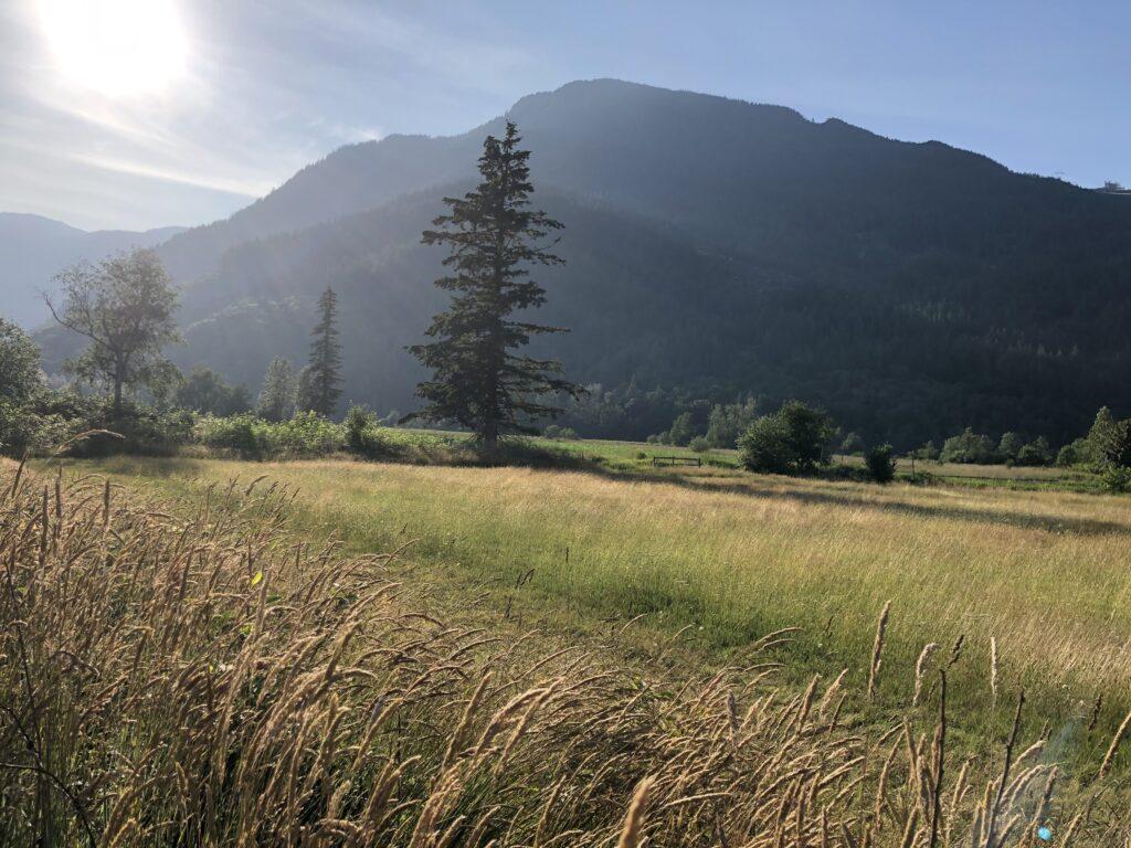 Wheat, mountains