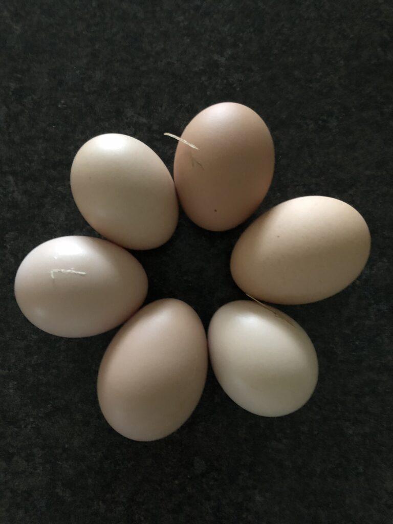 Eggs, chickens, farm