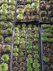 succulents_0