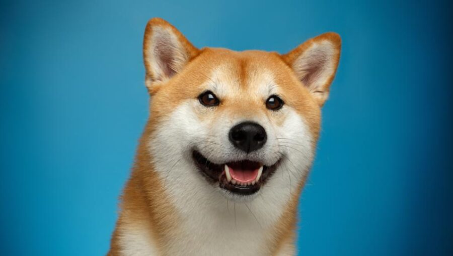 Doge trying to bottom, potential morning star