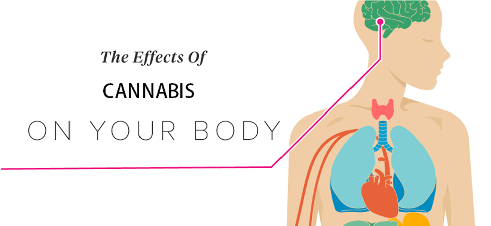 Effects of Cannabis on Your Body and Brain