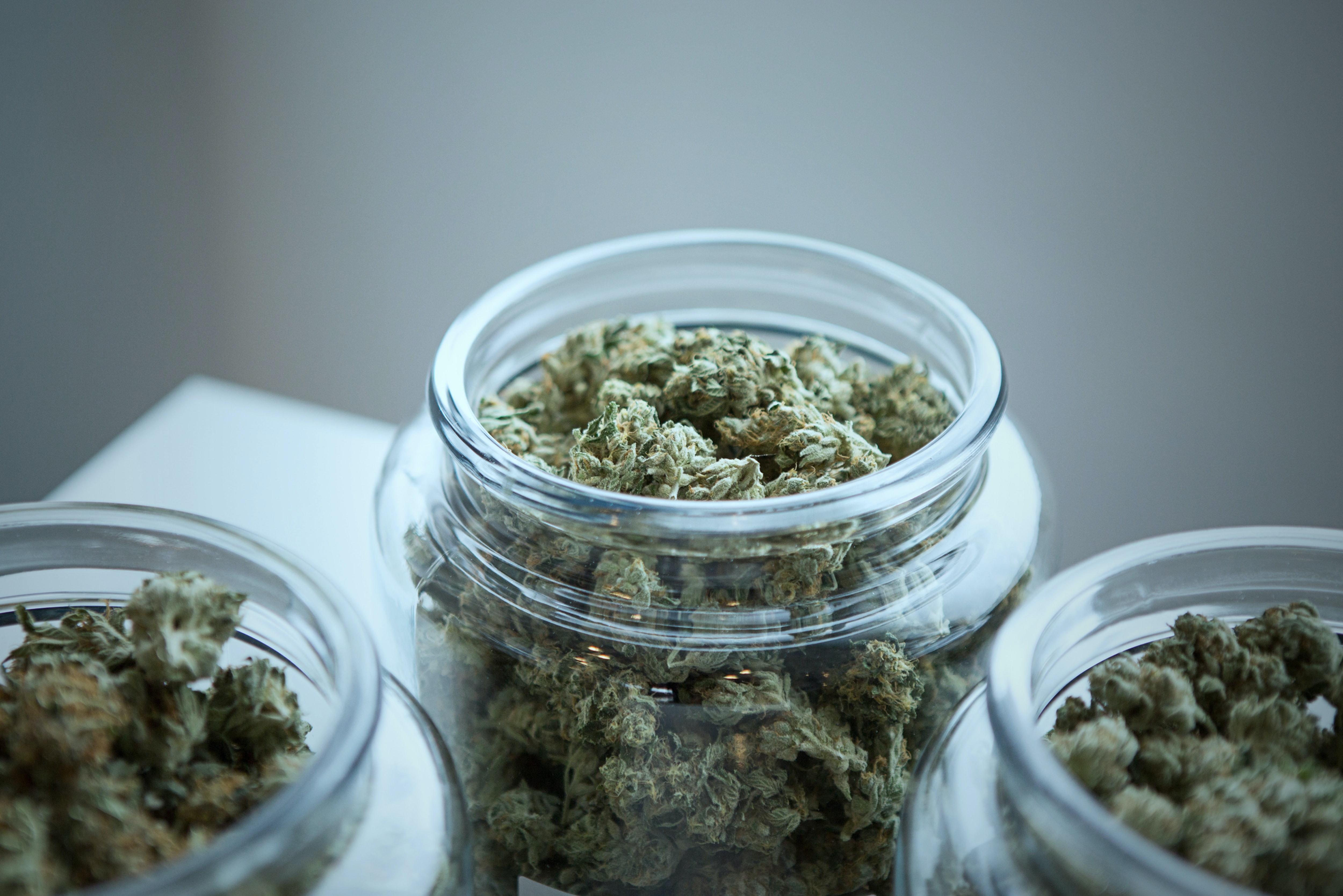 Tips for Cannabis Job Seekers