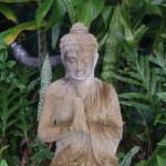 buddhaleaves