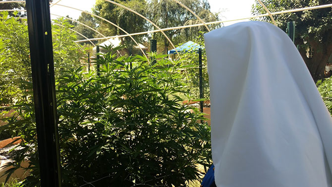 In Front of the Cannabis Plants