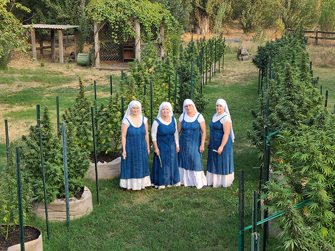 Sisters Among the Canabis Plants