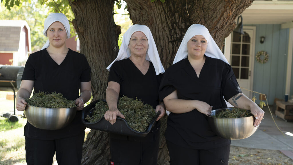 sisters of the valley with cannabis crop