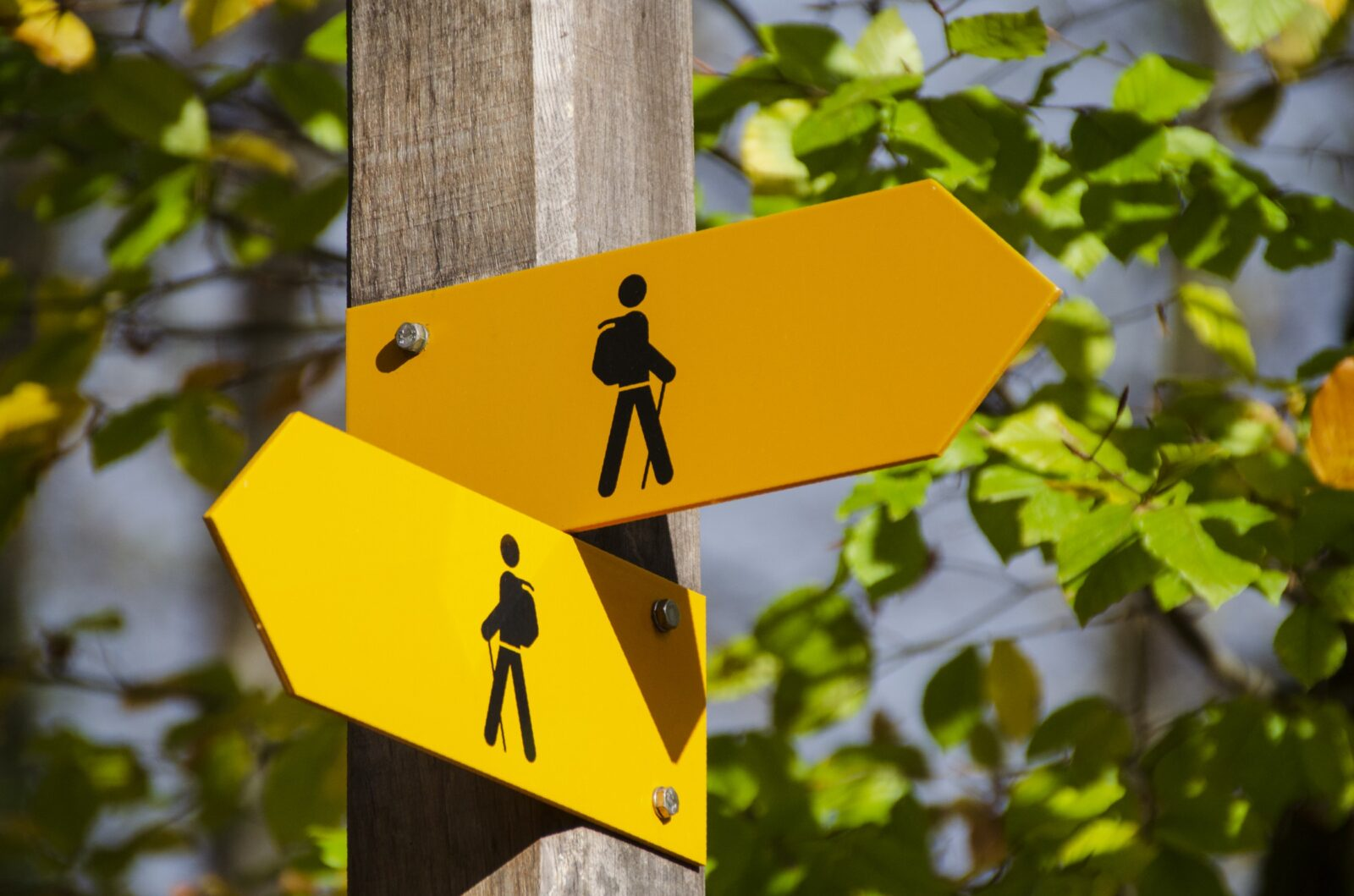 Yellow Signs on Wooden Pole. Signs look similiar but point in opposite directions seemingly providing contrary device.