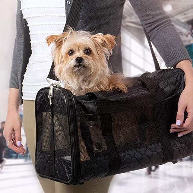 pet nanny travel services