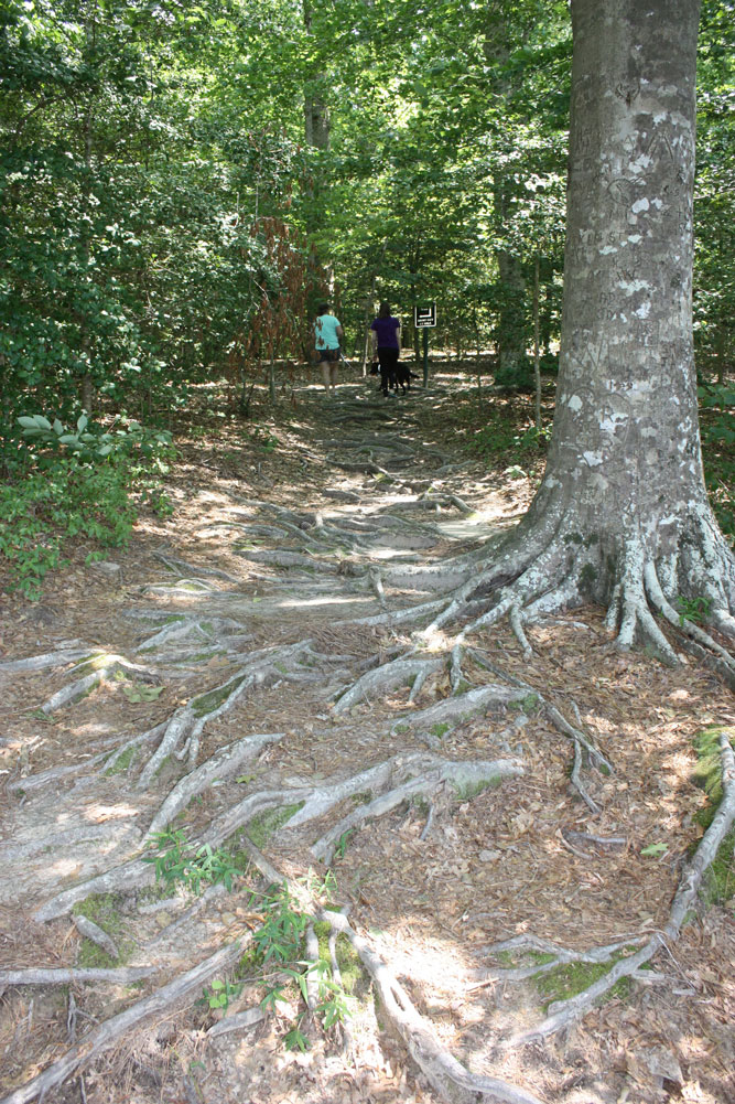 Hiking Trail Waller Mill Park Exposed Tree Roots