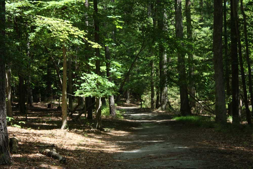 Hiking Trail at Newport News Park