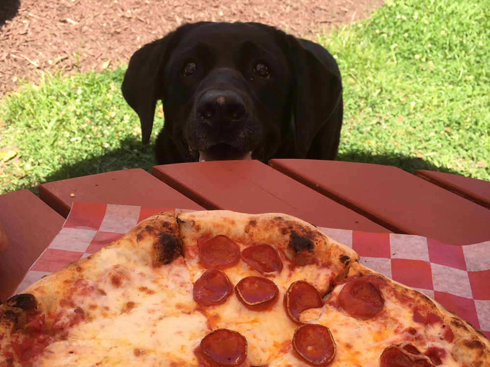 Dog Wants Pizza Virginia Peninsula Breweries Craft Brewery