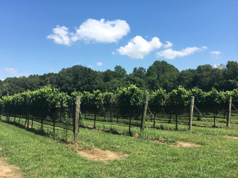Williamsburg Winery Review