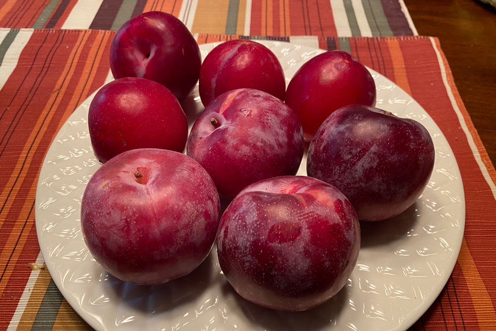 red plums plumcots