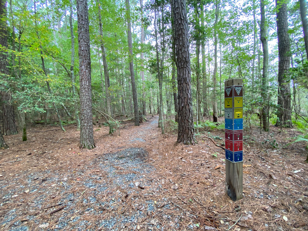 Hiking Mud Creek Trail at Belle Isle State Park