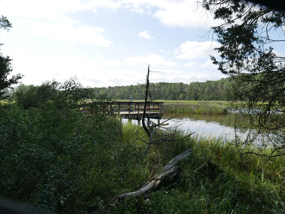 Outlook on Mulberry Creek Boardwalk at Belle Isle State Park