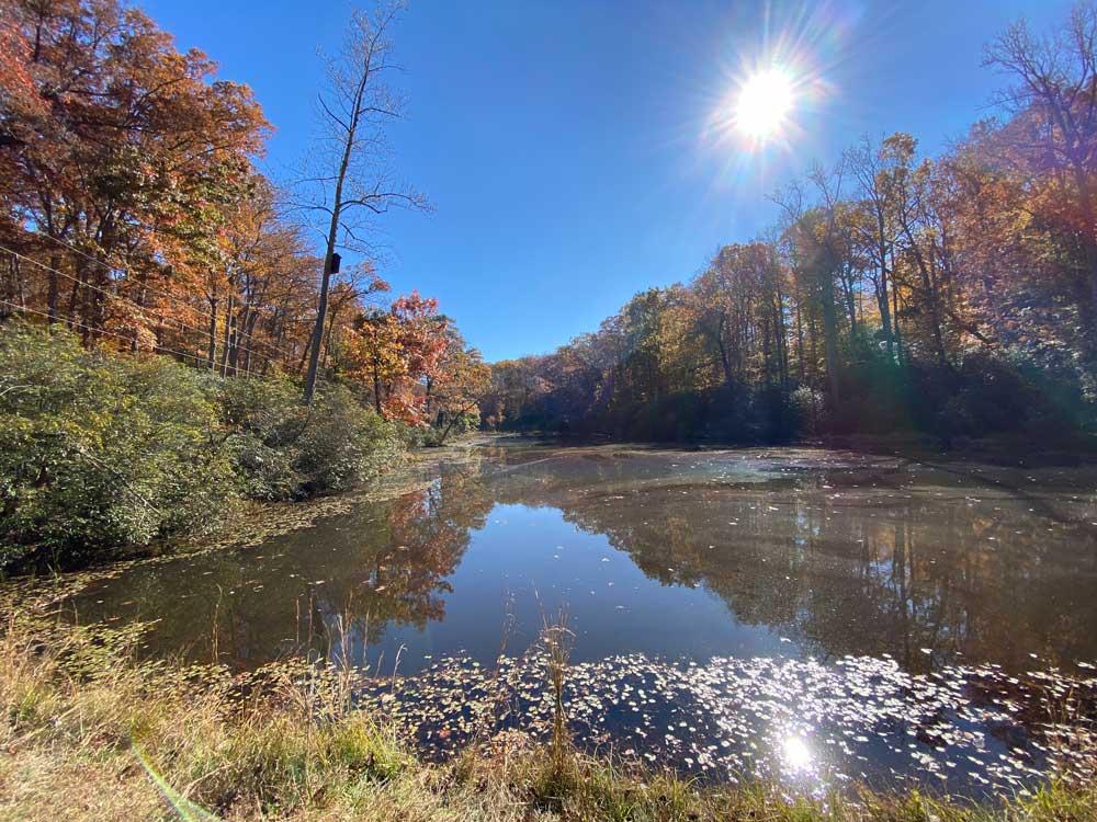 Westmoreland State Park Hiking Trail Rock Spring Pond