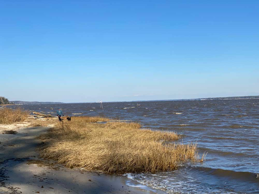 York River State Park Fossil Beach