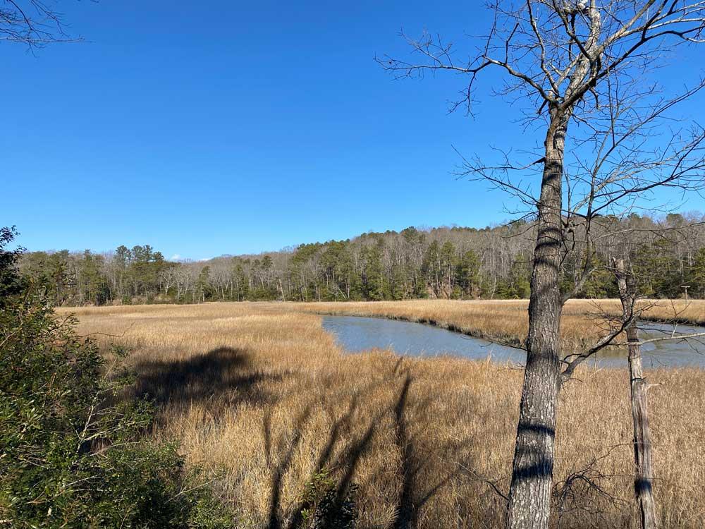 Taskinas Creek Overlook at York River State Park