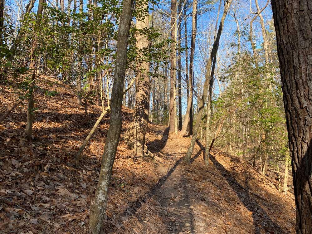 Taskinas Trail at York River State Park