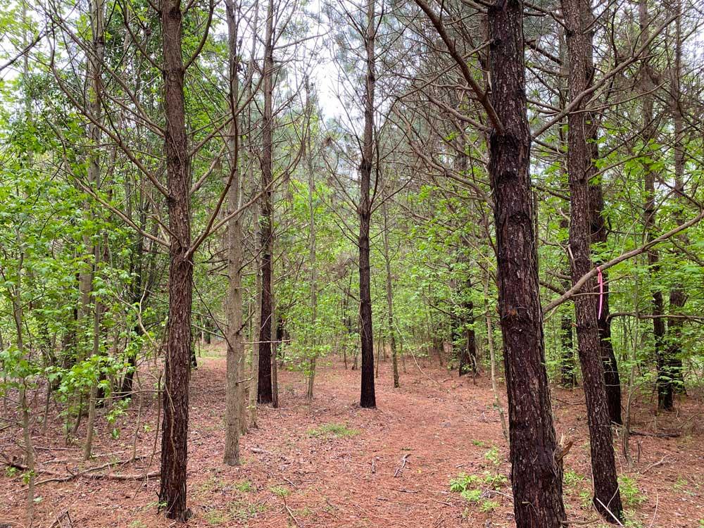Machicomoco State Park Forestry Trail
