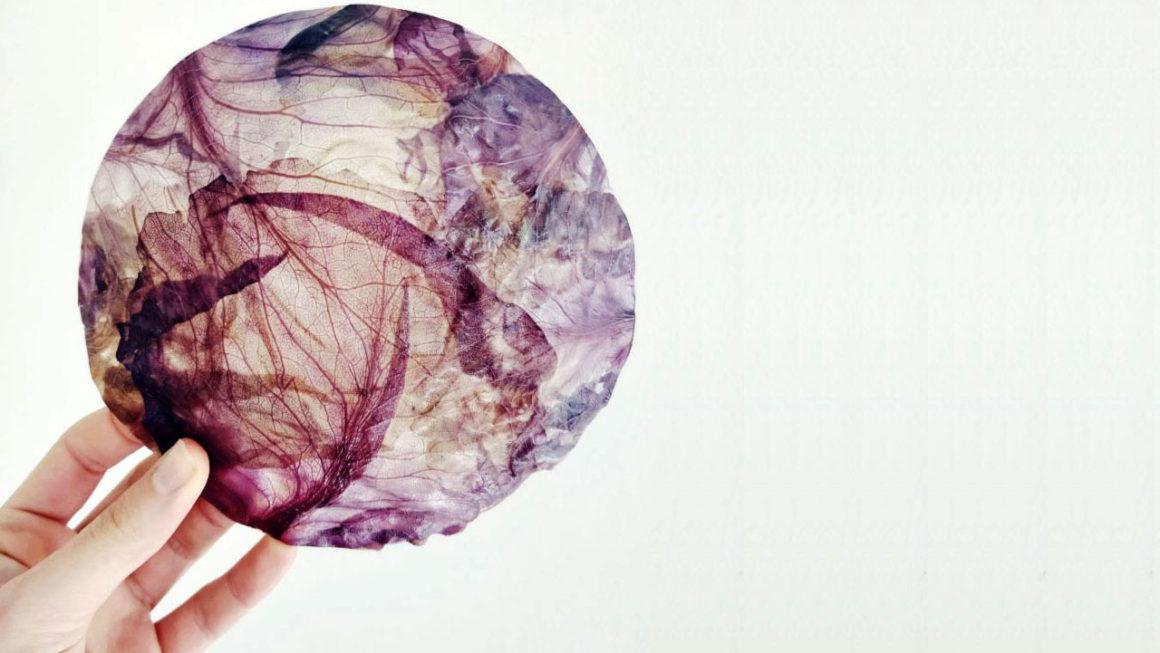 Biodesign: luminária tem cúpula feita com repolho roxo