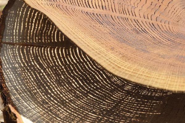 Maison & Objet 2020: a madeira rendada de Pascal Oudet
