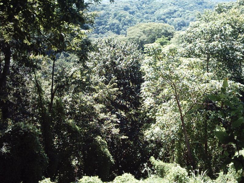 Nicaragua-Real-Estate-finca-ostional (13)
