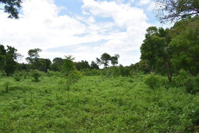 Nicaragua-bienes-raices-finca-san-rafael (9)