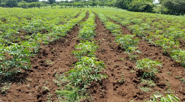 Terreno-Masaya-Nicaragua-Bienes-Raices 9