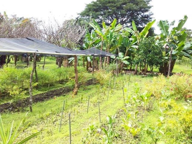 se-vende-finca-diria-nicaragua (6)